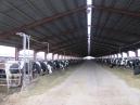 GTC 2013 noiembrie - Creştere şi exploatare vaci de lapte in Washington, SUA