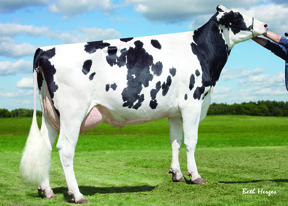 GDAM Sully Shottle May-TW