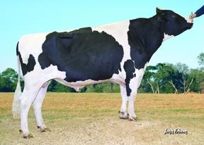 7HO08477 GABOR transmite exterior impresionant împreună cu o mulțime de lapte și trăsături de sănătate (fitness) deosebite.