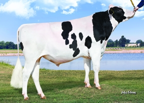 MOGUL - Impact global in reproducţia Holstein